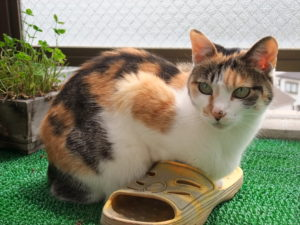 藤沢の猫専門ペットシッター、キャットシッターあい